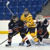 Quinnipiac women's hockey vs Princeton 11/13/15